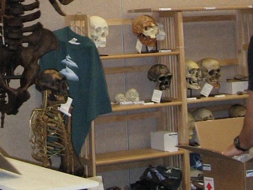 Dinosaur Exhibit Room