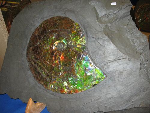 ammonite still embedded in the stone