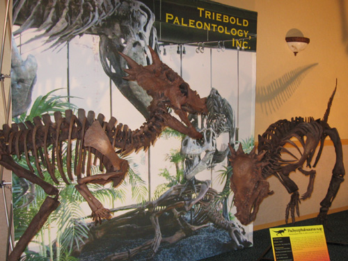 Dinosaur Exhibit Room